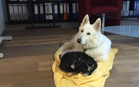 Sam und Hektor